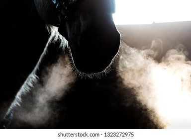 horse and girl in barn during cold winter day, steamy breath visible back lit from window