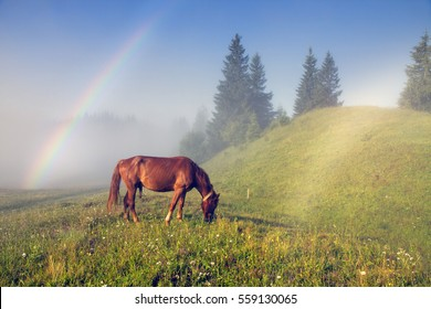 A horse grazes in the fog in the Carpathians. Involuntary erection of a large mammal on a background of the beauty of nature in the summer in the mountains after the rain at sunrise and the rainbow