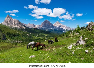 A horse grazes high in the mountains, Georgia panorama