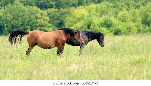 horse grazes on a green meadow