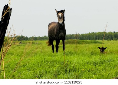 The horse grazes on the meadow. grazing horses