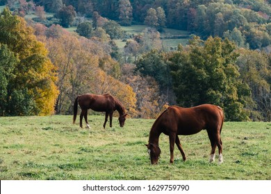 Horse grazing in autumn on a farm