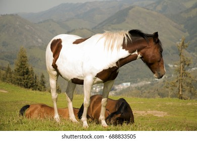 horse grazing in a beautiful meadow high mountains