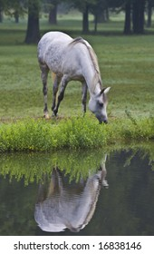 Horse grazing by pond
