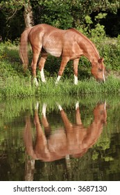 Horse grazing by the pond