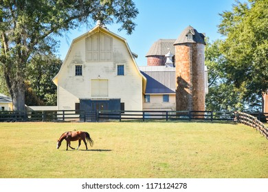 A horse grazing during the spring in a meadow near a barn