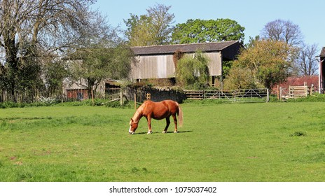Horse grazing in an english meadow with Farm buildings behind