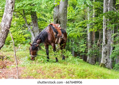 Horse grazing in the forest