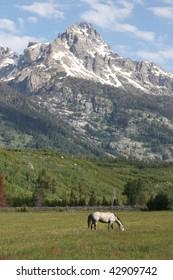 Horse Grazing Grand Tetons Valley