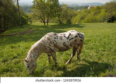 dapple horse images stock photos vectors shutterstock