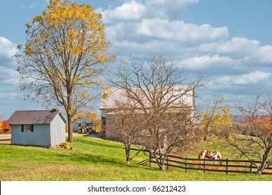 A horse is grazing inside the fence at a horse farm in Kentucky, USA.