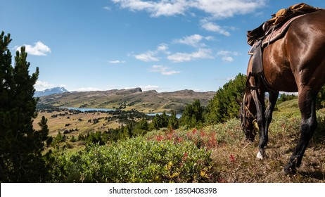 Horse grazing in an lpine meadow with alpine painbrushes, beautiful valley in background (BC, Canada).
