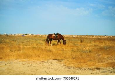 Horse grazing in meadow pasture summer landscape in Ukraine