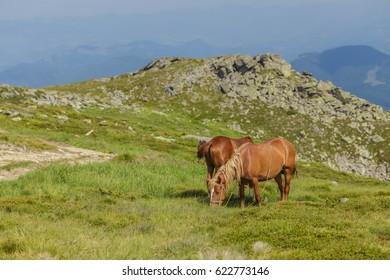 Horse grazing in a meadow Ukrainian Carpathian mountain valley. Early misty morning
