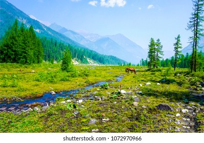 Horse grazing at mountain valley river stream landscape. Chestnut horse graze at mountain stream. Mountain green valley landscape
