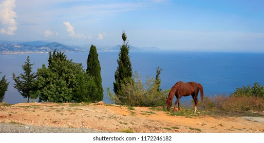 Horse grazing near trees on the background of the sea