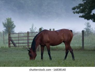 Horse grazing on foggy morning