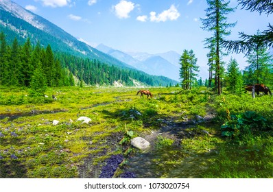Horse grazing on green mountain valley landscape. Green mountain valley horse grazing. Chestnut horse grazing on mountain valley grass