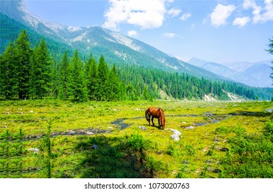 Horse grazing on green mountain river valley landscape. Mountain green valley grazing horse. Chestnut horse grazing on green mountain valley panorama