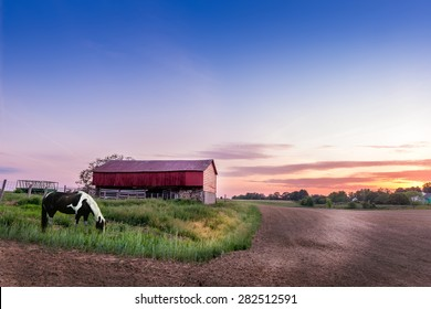 Horse grazing on a Maryland farm at sunset