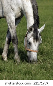 Horse grazing on the meadow