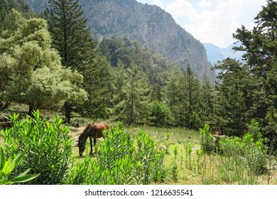 horse grazing on a meadow at Samaria Gorge in Crete at Greece.