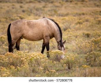Horse grazing on the range