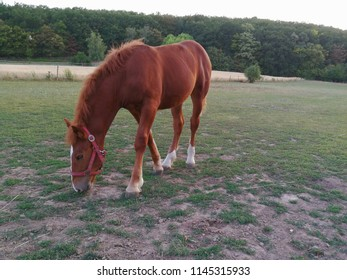The horse grazing in the pasture