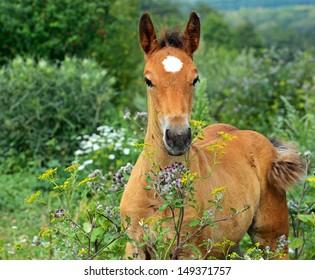 A horse grazing in a pasture