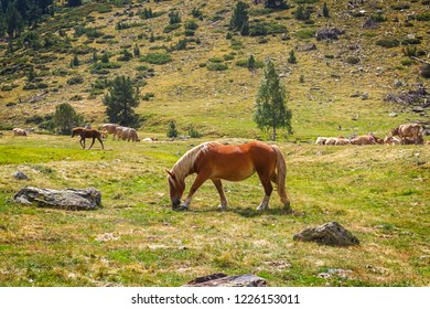 Horse Grazing in the Pyrenees, Catalonia