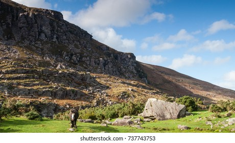 horse grazing in the rocky landscape of Gap of Dunloe, Ring of Kerry,  Ireland