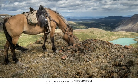 Horse grazing a top of a mountain on a horse pack trip (BC, Canada).
