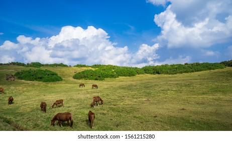 Horse grazing in Yonaguni Island, Okinawa.