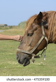 Horse and hand
