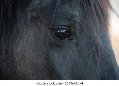 horse head and eye detail
