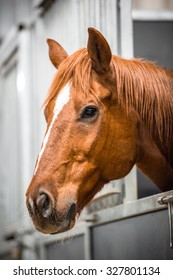Horse Head Looking out of a Stall