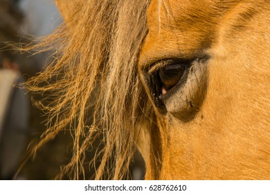 A horse head with mane and eye lit up in the sun in spring.