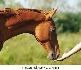 horse head with man's hand