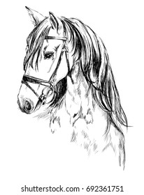 how to draw horseland horses