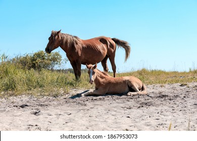 horse and her child on the sand against the background of a clear summer sky. heat tired horses