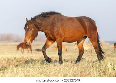 Horse in the herd