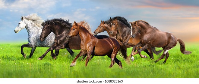 Horse herd gallops in green field