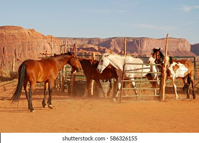 Horse herd in the Monument Valley in the wild west of the USA