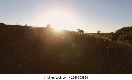 Horse herd is moving. Sun behind the hill. Warm summer morning. Aerial view of two horsemen.