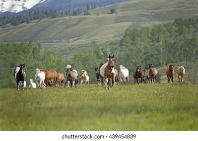 horse herd on the move