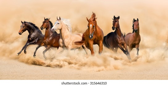 Horse herd run in desert sand storm