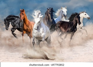Horse herd run fast in desert storm