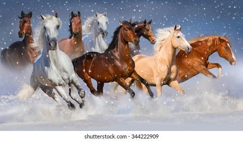 Horse herd run fast in winter snow field