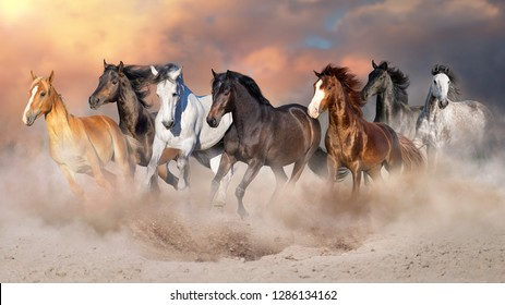 Horse herd run gallop in desert dust against dramatic sky