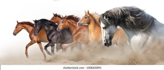 Horse herd run gallop in desert dust isolated on white